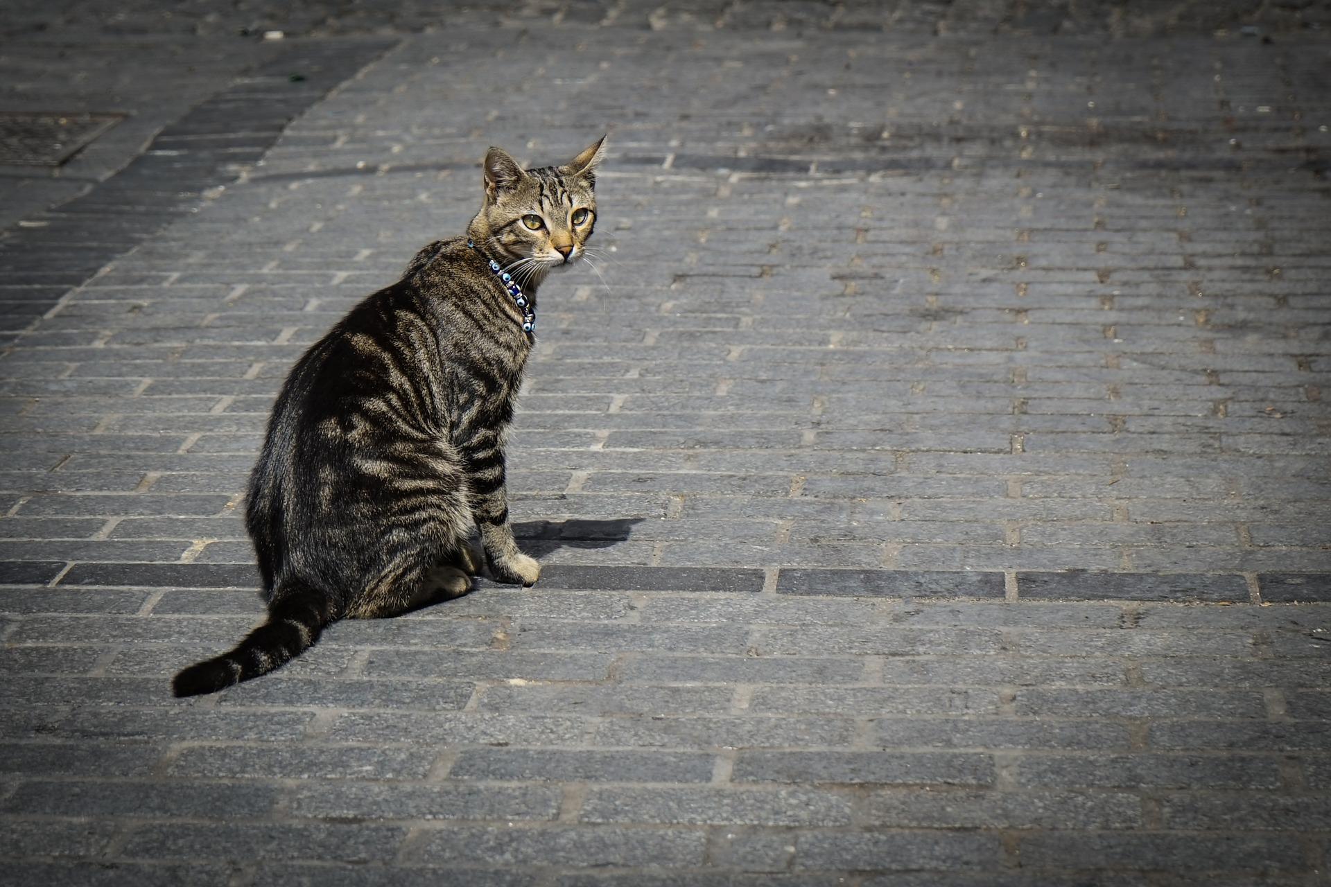 Японца арестовали в Турции за поедание кошек