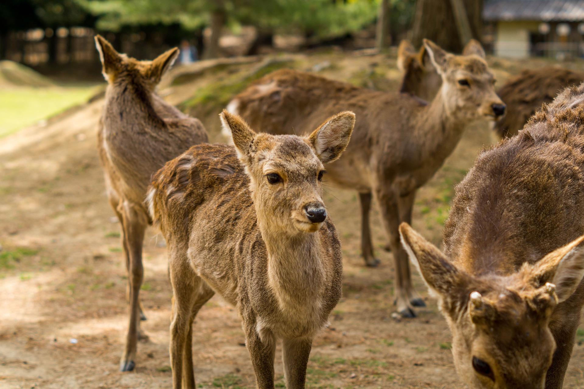 В Наре мужчина топором убил оленя