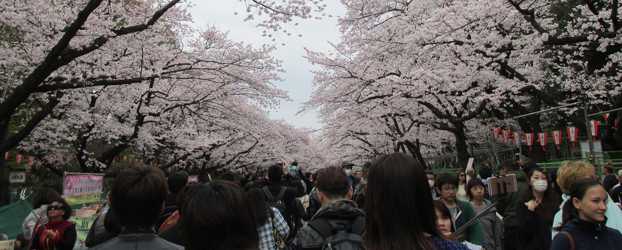 Туристический поток из России в Японию вырос на 42%