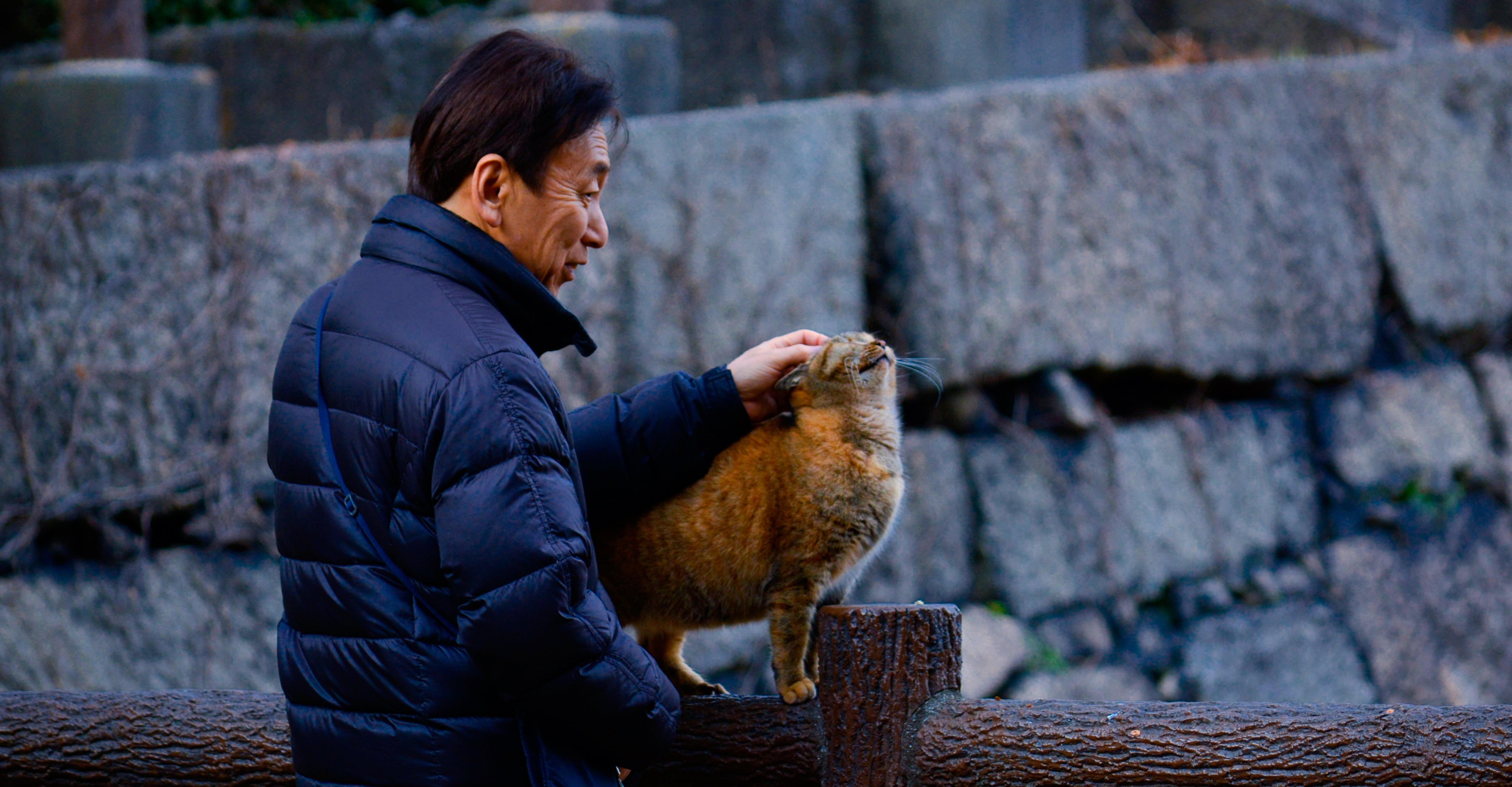 В Японии будет создана социальная сеть для пожилых людей