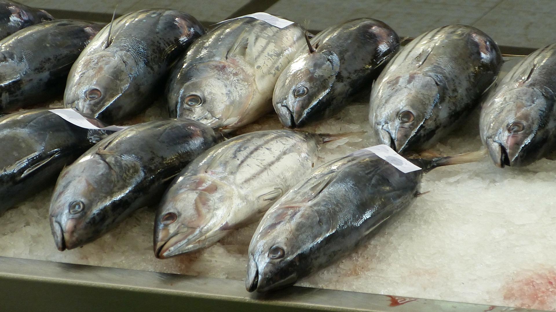 На аукционе в Японии голубой тунец был продан за 200000 долларов