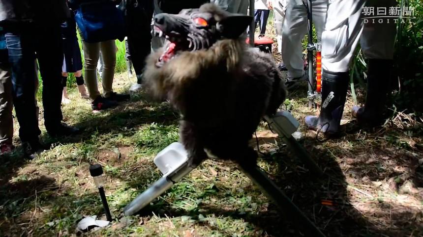 В Японии был разработан уникальный робот-волк для охраны рисовых полей