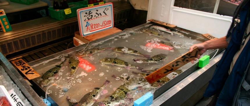 Японский супермаркет продал 5 упаковок рыбы Фугу с ядовитой печенью