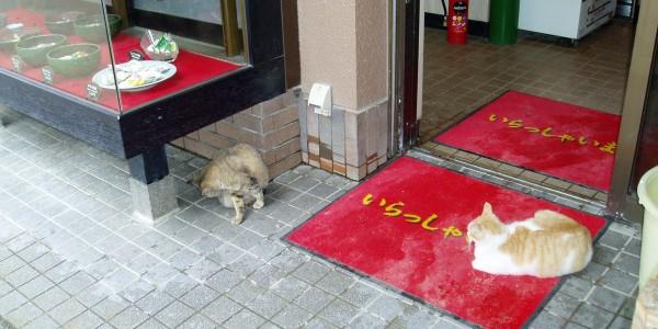 Бездомные животные в Японии