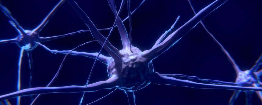 Новая экспериментальная модель позволит восстанавливать головной мозг после травм и инсультов