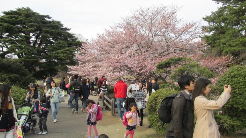 Япония изменяет условия выдачи виз русским туристам